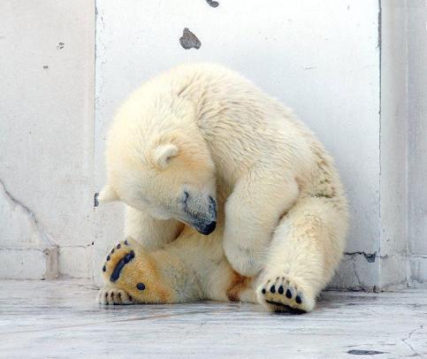 Urso Dormindo